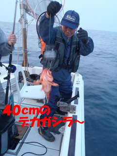 P4292083