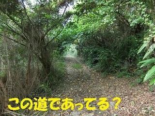 s-CIMG0983.jpg
